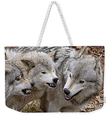 Weekender Tote Bag featuring the photograph  Alpha Displeasure 2 by Wolves Only