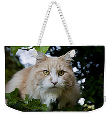 Cream And White Cat Weekender Tote Bag