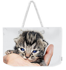 Kitten In A Hand Weekender Tote Bag by Susan Leggett