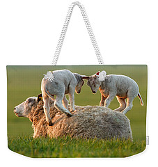 Leap Sheeping Lambs Weekender Tote Bag