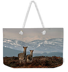 Weekender Tote Bag featuring the photograph    Sika Deer by Gavin Macrae