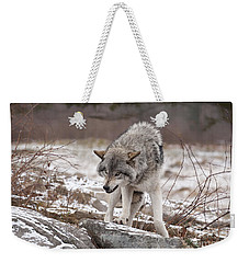Weekender Tote Bag featuring the photograph Adult Timber Wolf by Wolves Only