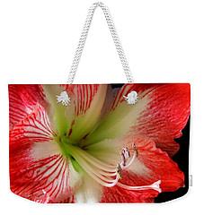 Amaryllis Weekender Tote Bag by Ron Davidson