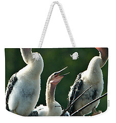 Anhinga Chicks Weekender Tote Bag by Mark Newman