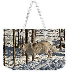 Weekender Tote Bag featuring the photograph Arctic Wolf by Wolves Only