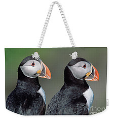 Atlantic Puffins In Breeding Colors Weekender Tote Bag by Yva Momatiuk and John Eastcott