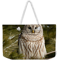 Barred Owl In A Pine Tree. Weekender Tote Bag by Michel Soucy