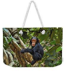 Chimpanzee Baby On Liana Gombe Stream Weekender Tote Bag