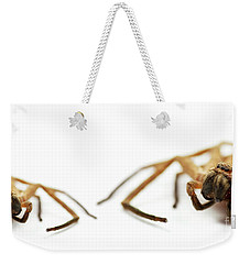 David And Goliath Daddy Longlegs Weekender Tote Bag by Jorgo Photography - Wall Art Gallery