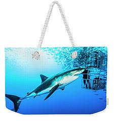 Female Great White Shark, Carcharodon Weekender Tote Bag