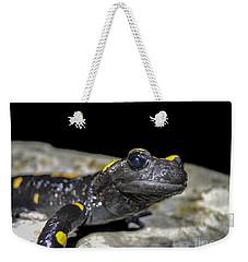 Fire Salamander Salamandra Salamandra Weekender Tote Bag by Shay Levy
