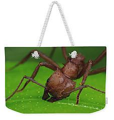 Leafcutter Ant Cutting Papaya Leaf Weekender Tote Bag by Mark Moffett