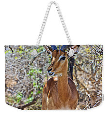 Male Impala In Kruger National Park-south Africa   Weekender Tote Bag by Ruth Hager