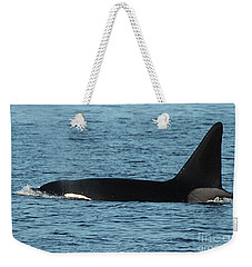 Weekender Tote Bag featuring the photograph Male Orca Killer Whale In Monterey Bay California 2013 by California Views Mr Pat Hathaway Archives