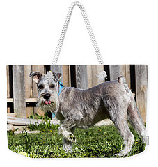 Weekender Tote Bag featuring the photograph Miniature Schnauzer by Michael Chatt