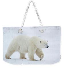 Polar Bear Ursus Maritimus Walking Weekender Tote Bag by Panoramic Images