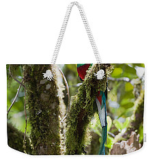 Weekender Tote Bag featuring the photograph Resplendent Quetzal Male Costa Rica by Konrad Wothe