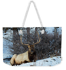 Weekender Tote Bag featuring the photograph Rocky Mountain Elk by Michael Chatt
