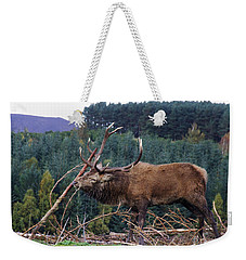 Rutting Red Deer Stag  Weekender Tote Bag by Phil Banks