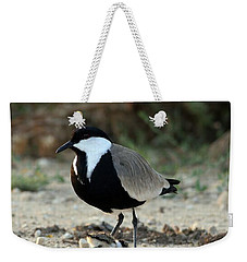 Spur-winged Plover And Chick Weekender Tote Bag