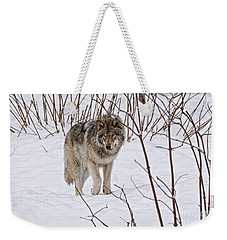 Weekender Tote Bag featuring the photograph Timber Wolf by Wolves Only