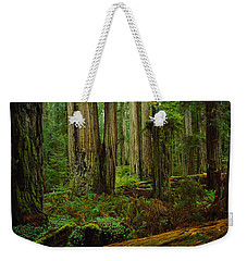 Trees In A Forest, Hoh Rainforest Weekender Tote Bag