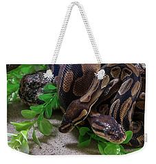 Two Burmese Pythons Python Bivittatus Weekender Tote Bag