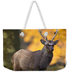 110307p073 Weekender Tote Bag by Arterra Picture Library