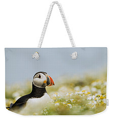 Atlantic Puffin In Breeding Plumage Weekender Tote Bag by Sebastian Kennerknecht
