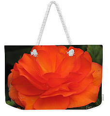 Weekender Tote Bag featuring the photograph Begonia Named Nonstop Apricot by J McCombie