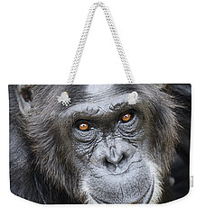 Chimpanzee Portrait Ol Pejeta Weekender Tote Bag