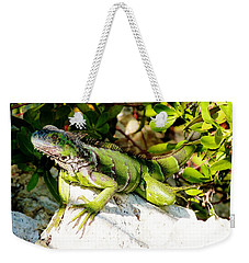 Weekender Tote Bag featuring the photograph Green Iguana by Amar Sheow
