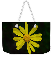 Weekender Tote Bag featuring the photograph Isolated Daisy by Debra Martz