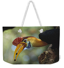 Sulawesi Red-knobbed Hornbill Male Weekender Tote Bag by Tui De Roy