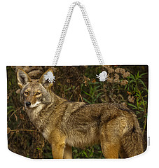 The Coyote Weekender Tote Bag