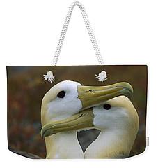 Waved Albatross Pair Bonding Galapagos Weekender Tote Bag by Tui De Roy