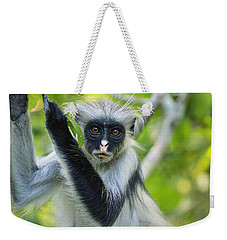 Weekender Tote Bag featuring the photograph Zanzibar Red Colobus In Tree Jozani by Thomas Marent