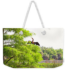 Anhinga Anhinga Anhinga On A Tree Weekender Tote Bag by Panoramic Images