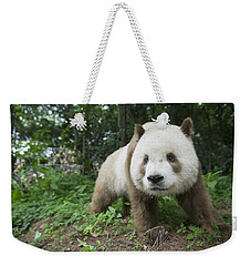 Giant Panda Brown Morph China Weekender Tote Bag
