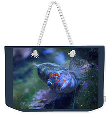 Weekender Tote Bag featuring the photograph Redspotted Hawkfish  by Savannah Gibbs