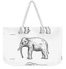 Elephant Evolution, Artwork Weekender Tote Bag