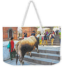 A Holy Cow Climbing Steps From Bagmati River In Kathmandu-nepal  Weekender Tote Bag