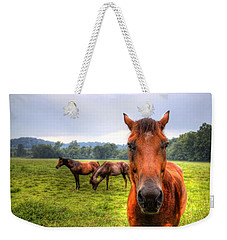 Weekender Tote Bag featuring the photograph A Starring Horse 2 by Jonny D