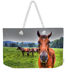 Weekender Tote Bag featuring the photograph A Starring Horse by Jonny D