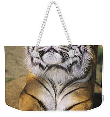 A Tough Day Siberian Tiger Endangered Species Wildlife Rescue Weekender Tote Bag
