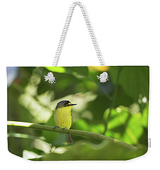 A Yellow-lored Tody Flycatcher Weekender Tote Bag