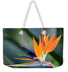 Weekender Tote Bag featuring the photograph Aflamed by Deborah  Crew-Johnson