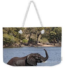 African Elephant In Chobe River  Weekender Tote Bag