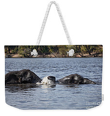 African Elephants Swimming In The Chobe River Botswana Weekender Tote Bag by Liz Leyden