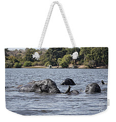 Weekender Tote Bag featuring the photograph African Elephants Swimming In The Chobe River by Liz Leyden